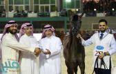 انطلاق بطولة منطقة مكة المكرمة العاشرة لجمال الجواد العربي بجدة