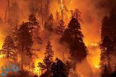 السفارة السعودية لدى تركيا تحذر المواطنين من حرائق الغابات