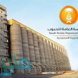 مركز الملك سلمان للإغاثة يوزع أكثر من 32 طنًا من السلال الغذائية للنازحين من صعدة