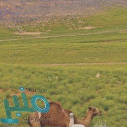 الطببعة قرب #عرعر شمال #السعودية 2