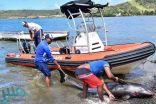 شاهد.. نفوق الدلافين إثر تسرب أطنان من النفط في المحيط الهندي