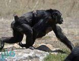 """بعد الفئران.. تايلاند تجري تجارب على القرود لأجل """"لقاح كورونا"""""""