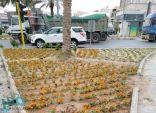 """إمارة مكة توضح ملابسات فيديو """"إتلاف شتلات مهرجان الزهور"""""""