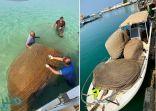 ضبط ٤٠ قرقور صيد بحري مخالف في القنفذة