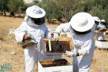 """""""البيئة"""": فتح باب التسجيل للبرنامج التدريبي المتكامل لتربية النحل"""